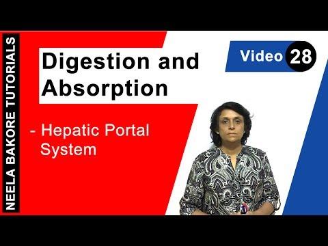 BAI Empfehlungen zur arteriellen Hypertonie bei Kindern