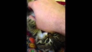 Tickle Remmi's Belly