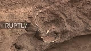 Argentyna: Muszla Glyptodon znaleziona na plaży Camet Norte.
