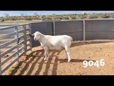 BUNN 9046 T3
