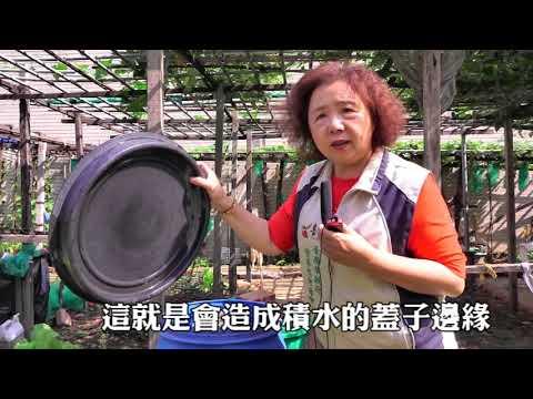 臺南市政府登革熱防治中心 多元菜園高風險登革熱社區防治宣導