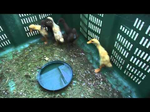 Lanalisi un calla su uova un verme come consegnare il graffio