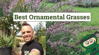Best Ornamental Grasses for Gardens & Planting guide