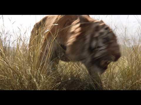 Kniha džunglí - HD trailer B