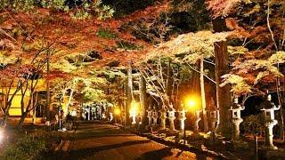 佛通寺の紅葉 ライトアップ