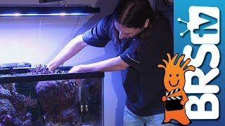 BRS Reef Savvy Tank Upgrade: EP 11 -- How to Start a Saltwater Aquarium