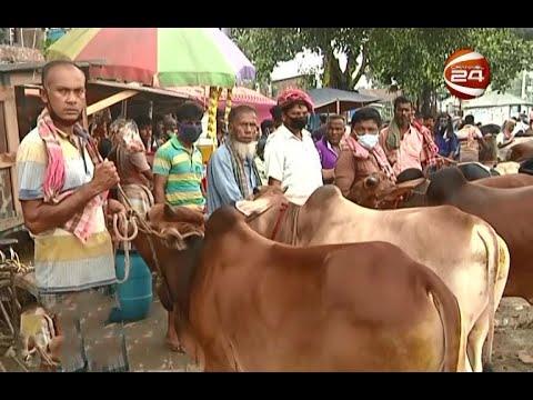 বগুড়ার প্রখ্যাত মহাস্থান কোরবানির পশুরহাট