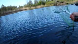 Суворощь река рыбалка