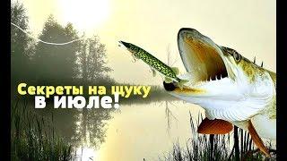 На что лучше клюет рыба в июле