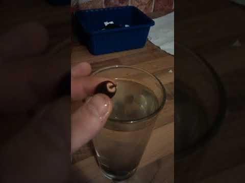Der Ingwer für die Potenz das Pulver