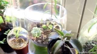 Pflanzen am Fensterbrett, kleine Übersicht