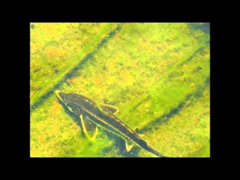 Die Parasiten der Effloreszenz auf dem Körper
