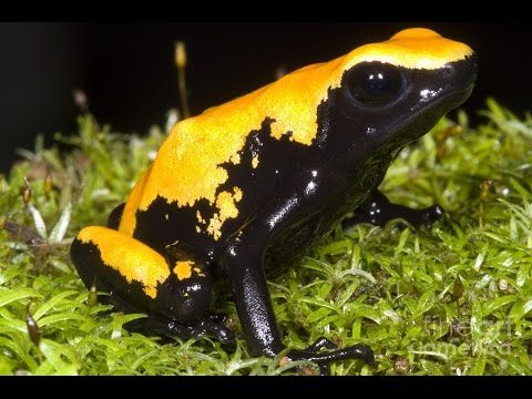 Top 5 Most Poisonous Frogs on Earth