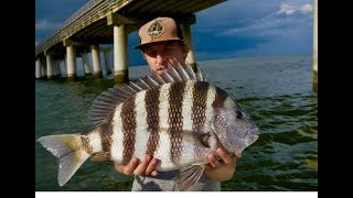 GIANT SHEEPSHEAD LOVE THIS BAIT! EPIC SHEEPSHEAD FISHING with HOW TO and TIPS