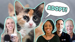 All About Cat Adoption & Cat Health!