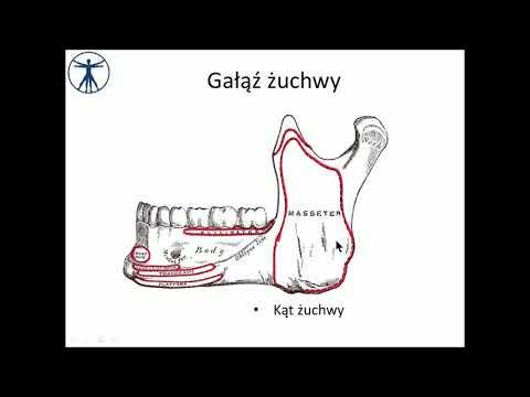 Pobierz ruqyah szariatu pełne leczenie stawów stawu kolanowego kości