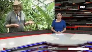2018 КТК Руководить петропавловским ботаническим садом будут музыканты