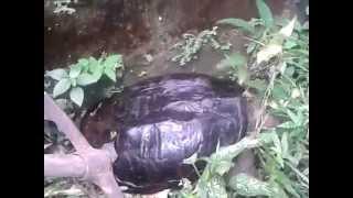 preview picture of video 'Salvando a la tortuga'