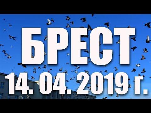 14.04.2019 г. БРЕСТ КОРМИТ ГОЛУБЕЙ!