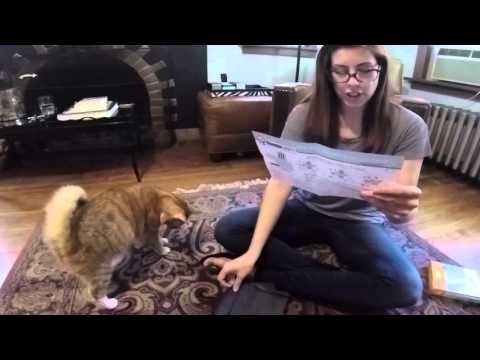 Cat in a Vest || Thundershirt Unboxing and Review