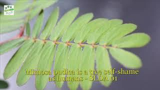 SLDA - 免费在线视频最佳电影电视节目 - Viveos Net