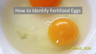 How to Identify Fertilized Eggs