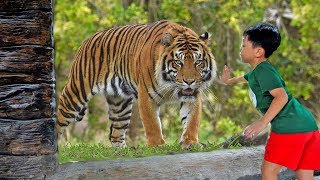 Wild Animal at the ZOO Video for Kids Outdoor Playground for Children