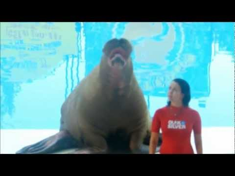 Sea Lion Singing Scatman John – I'm a Scatman