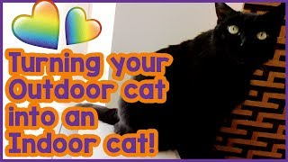 How to Make an Outdoor Cat an Indoor Cat! Turning Your Cat from and Outdoor Cat to an Indoor Cat!