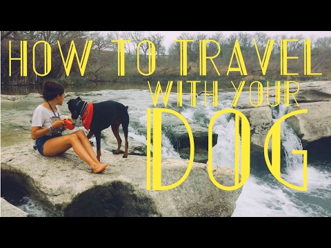 NOMAD TIPS! - Top 5 Hacks To Traveling With A Dog