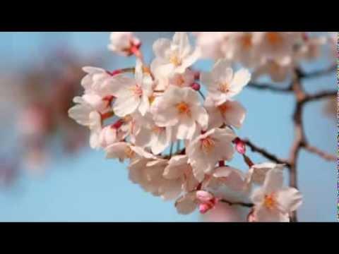 Shopen -  Шопен   Весенний вальс