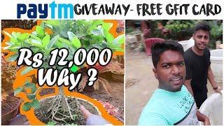 Wholesale Nursery  | Tree Nursery | Yamuna Bank Nursery | Vlog 14th | Best Place To Buy Tree