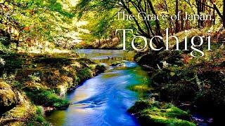 The Grace of Japan, TOCHIGI