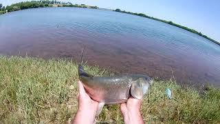 Рыбалка в ставропольском крае на курганском водохранилище