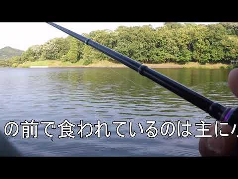熊本立岡池で見つけた3シュリンプテクニック