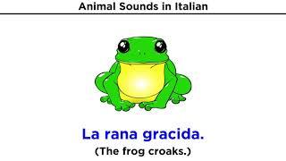 What Sounds do Italian Animals Make?