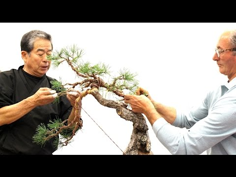 SakkaTen Bonsai demo by Kunio Kobayashi