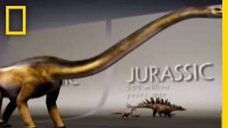 Fossil Record Mystery   National Geographic
