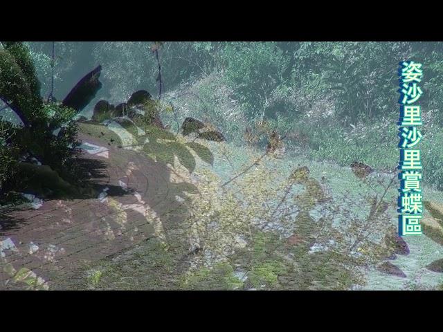 <html> <body> Film for Purple Butterfly2020-1-17 </body> </html>
