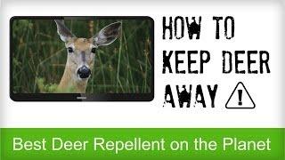 Best Deer Repellent Reviews   Natural Recipe for Repelling Deer   Animal Control