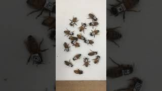 QR codes on bees