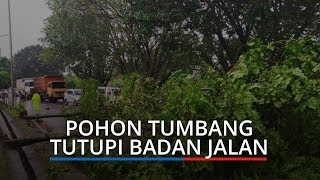 Hujan Disertai Angin Kencang Landa Palembang, Puluhan Pohon Tumbang hingga Tutupi Badan Jalan