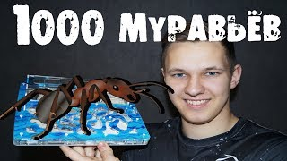 Выращиваем 1.000 муравьёв дома!!! Битва с гусеницей!