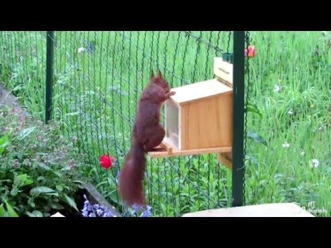 Eichhörnchen öffnet Futterhaus