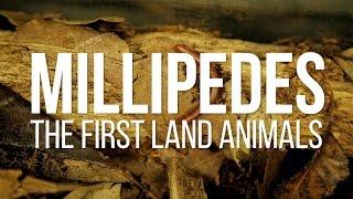 Millipedes: The First Land Animals