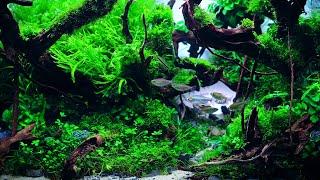 2-godzinne nagranie akwarium (Green Aqua)