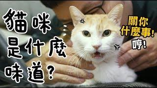 【黃阿瑪的後宮生活】試聞!貓咪是什麼味道?