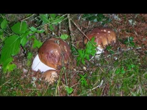 Quali trattamenti di un fungo di gambe