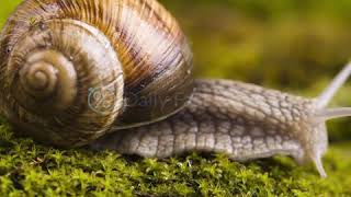 Snail_Original_Liquid_Product_Video_02