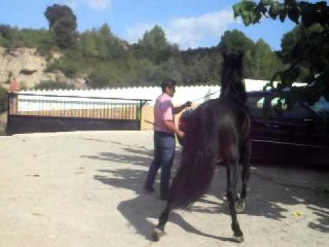 Attivatore di cavallo di zoodrugstore